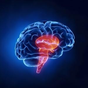 brain stem biopsy, physical exam nervous system