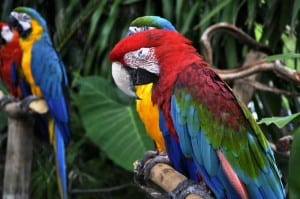 macaw icd-10