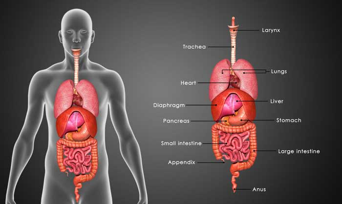 Ama Announces List Of The Top 6 Useless Organs Gomerblog