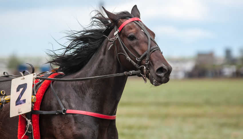 Racehorse Confirms He's Peeing Like a Human on Lasix