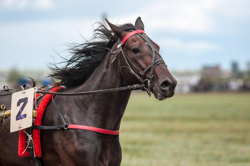 racehorse peeing Lasix
