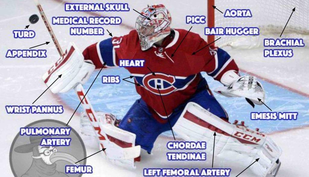 Anatomy of an NHL Goalie