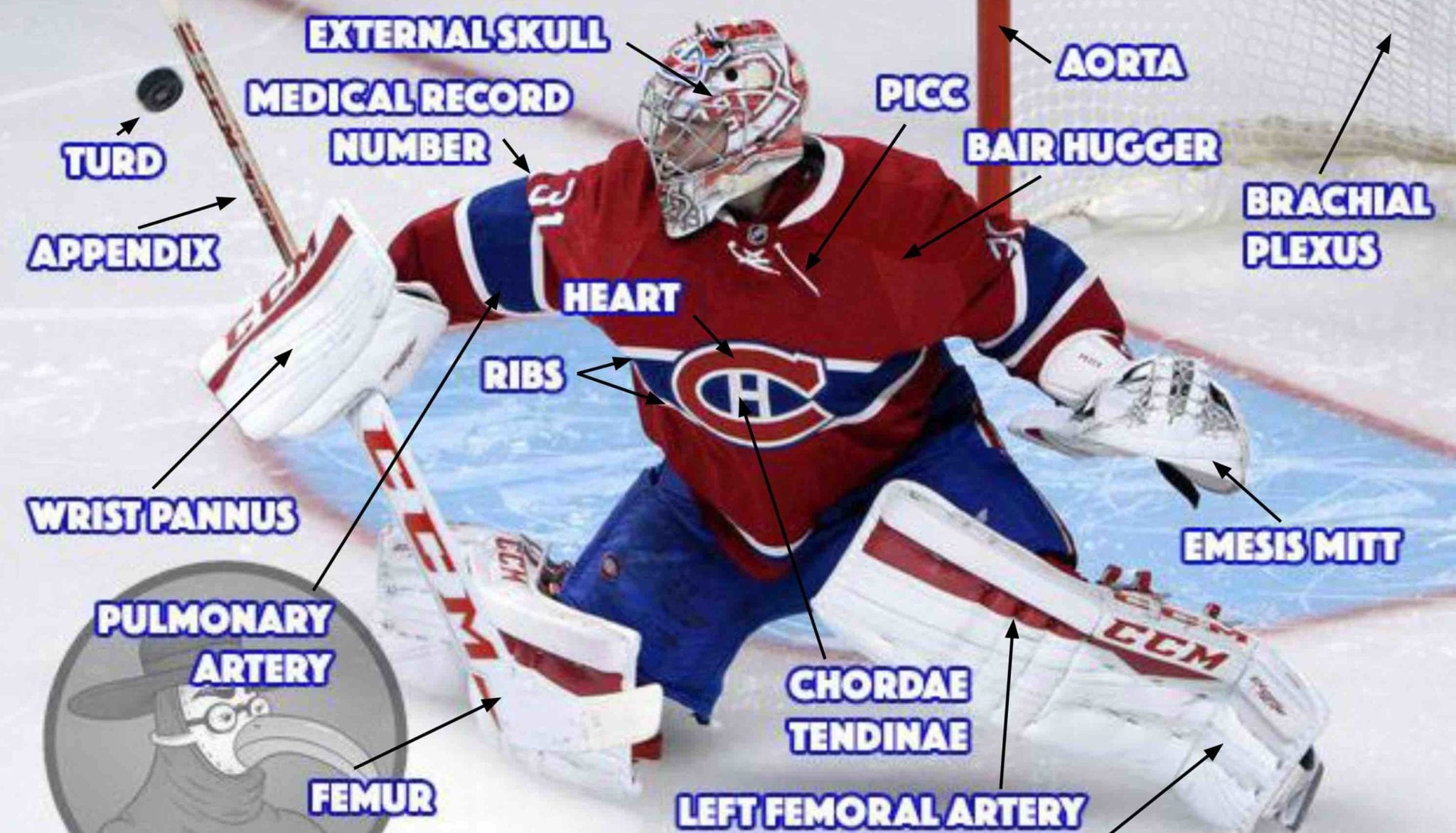 Anatomy Of An Nhl Goalie Gomerblog