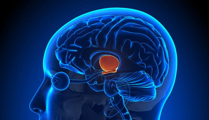 Unable to Fix Office Thermostat, Neurosurgeon Removes Own Hypothalamus